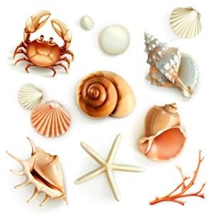 Atlas mořských živočichů