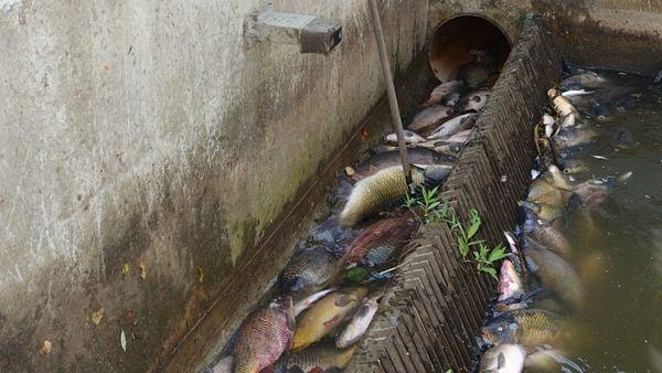 V řece Berounce se udusilo několik stovek ryb. Podle rybářů se může něco podobného brzy zopakovat