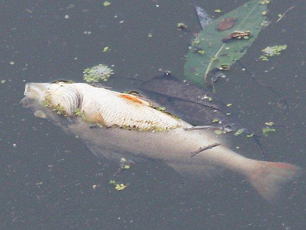 Kvůli úniku neznámé látky do rybníka uhynuly ryby