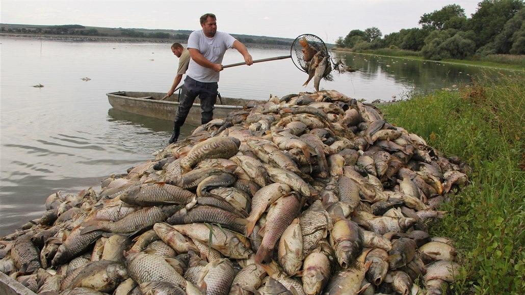 Vědci z Mendelovy univerzity: Předpovíme hromadný úhyn ryb