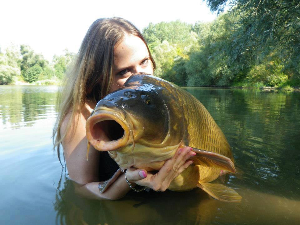 Stanovení hodnoty upytlačených ryb