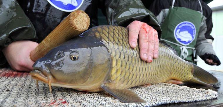 Rybaření se stává zdrojem obživy, brzy nebude co lovit