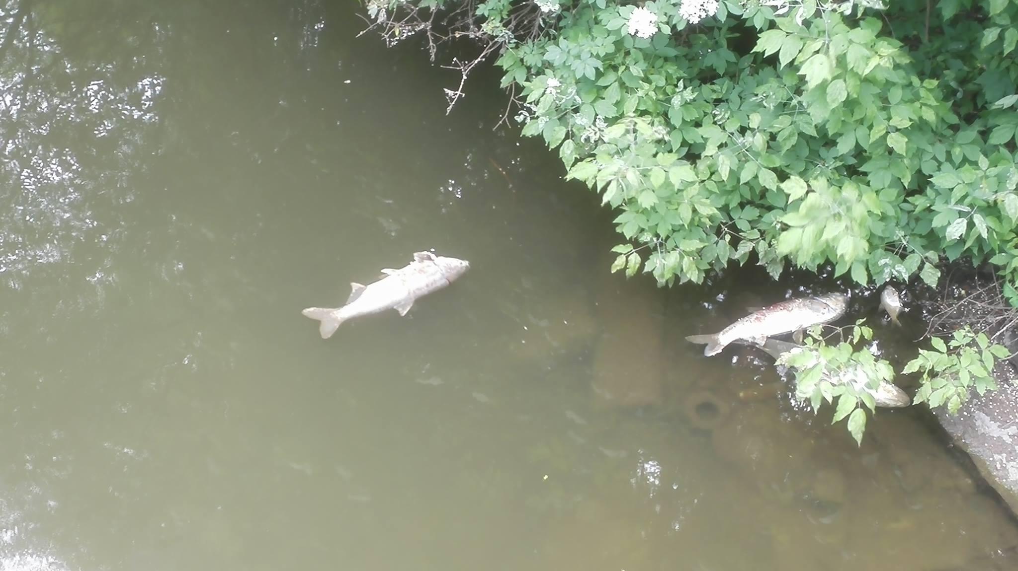 V Břeclavi uhynuly desítky ryb. Na vině může být i bouřka