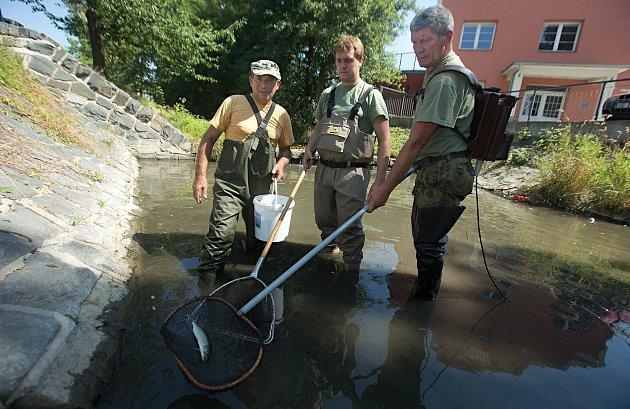 Trusovický potok vyschnul, rybáři zachraňují tisíce ryb