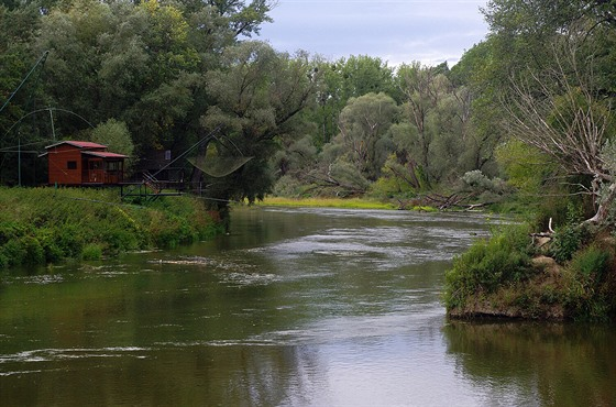 V Dyji dali pstruhům trdliště, řeka je kvůli kormoránům téměř bez ryb