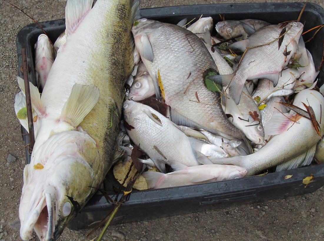 Více než tunu ryb mohou rybáři odepsat. Skončí v kafilérii
