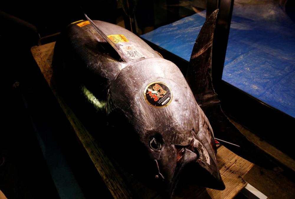 Obří tuňák se v Tokiu prodal za rekordní částku. Kupec zaplatil v přepočtu 69 milionů korun