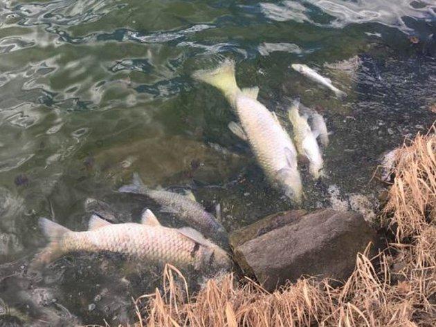 Čistička vod funguje jen z poloviny, zda to způsobilo úhyn ryb, se zatím neví
