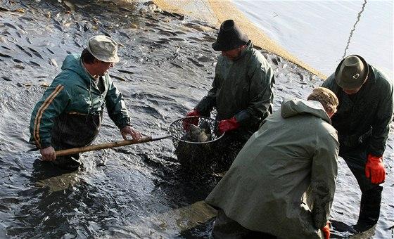 Při výlovu se mezi rybáře vmísili pytláci, vytahali přes třicet ryb