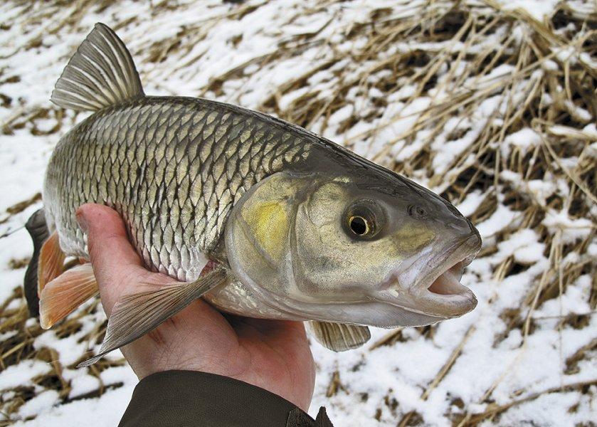 Zimní rybolov jiným pohledem