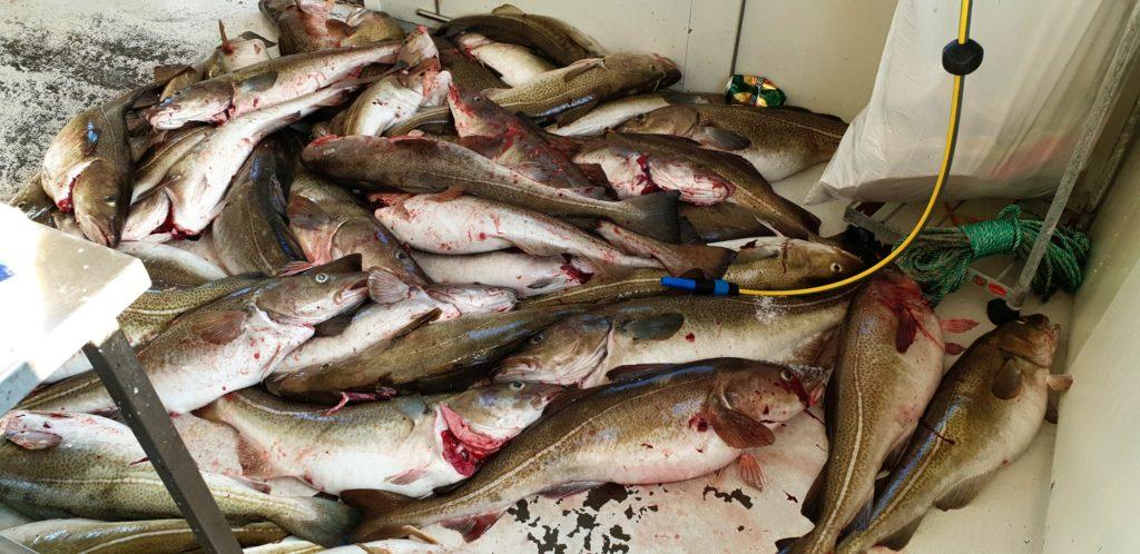 Pašování ryb aneb vývozní kvóty 2019