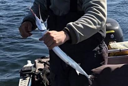 Jak jsme lovili jehlice