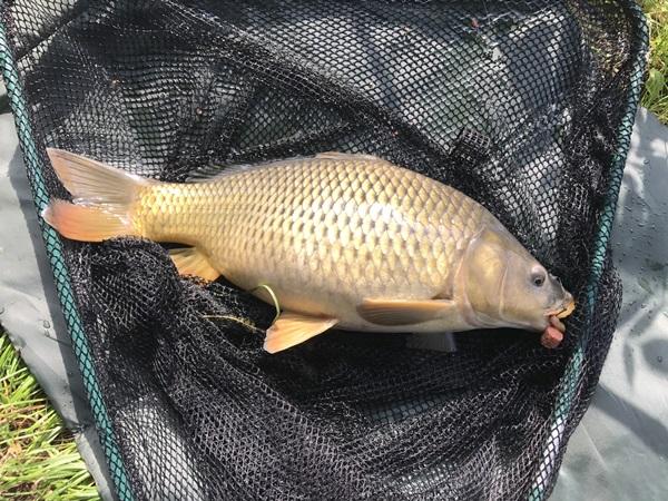 Začínáme rybařit – lov  na feeder