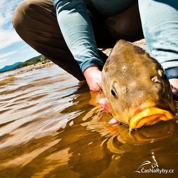 Nejoblíbenější rybářské fotky, které jsme vám přinesli na Facebooku: Kapr