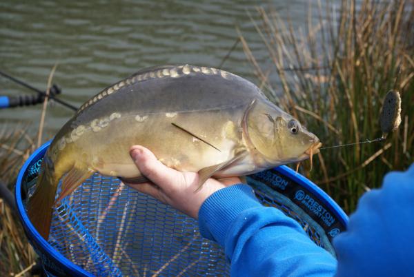 Jarní nástraha FISHMALLOWS – česnek
