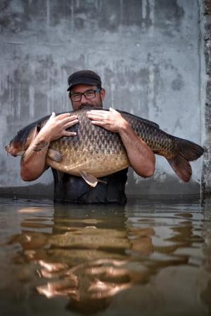 Labe vydalo krásného kapra o váze přes 30 kg