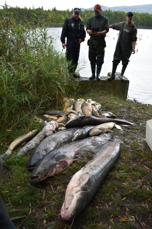 Dočasný zákaz lovu ryb na MP rybářském revíru 441 005 – Bílina 6, podrevír č. 9/II., nádrž Farského (9,2 ha)
