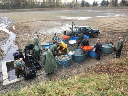 Rybochovné zařízení Chabařovice hledá brigádníky