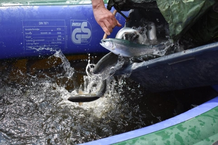 Jarní vysazování ryb do rybářských revírů pokračuje
