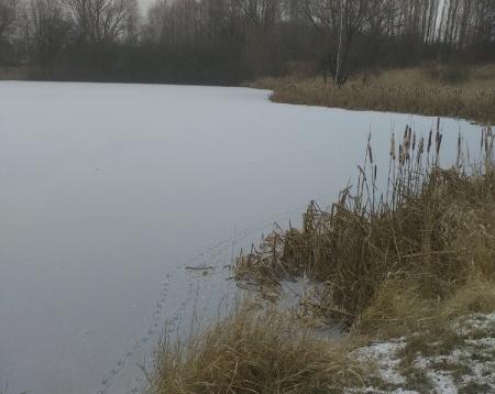 Obnovení rybolovu na nádrži Droužkovice č. 2