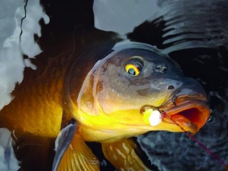 Rybám se v Severočeském ÚS daří, potvrzují to i úlovky rybářů