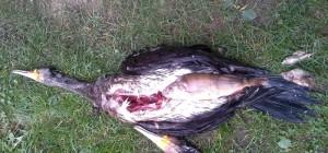 MASAKR RYB: Predátoři v revírech zlikvidovali ryby za 25 milionů! Rybáři dostanou zpátky 60 tisíc