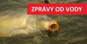 ZPRÁVY OD VODY: Na českých svazovkách berou obrovští kapři! Mrkněte na fotky!