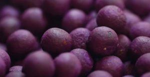 Výroba boilies v Anglii: Jak se vyrábí nejlepší kuličky na kapry na světě?