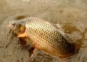 Nejvíce ryb zabijí důchodci. Každý rybář si průměrně odnese 31 kilo ryb ročně