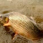 ODPORNÉ: Rybář přivázal uloveného kapra za skřele! Porybný mu okamžitě sebral povolenku
