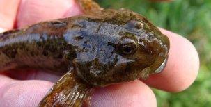 Biologie ryb 1.část