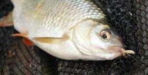 SČeňkem na rybách