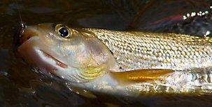 Přirozená reprodukce ryb vnašich vodách 1