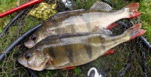 Biologie ryb – kosterní a svalová soustava