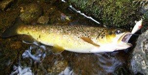 Biologie ryb – Pohlavní soustava
