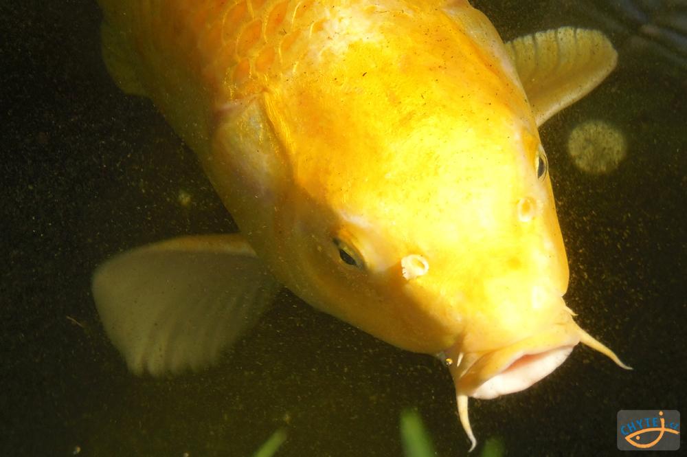 """článek: Jak ulovit """"zlatou rybku"""""""