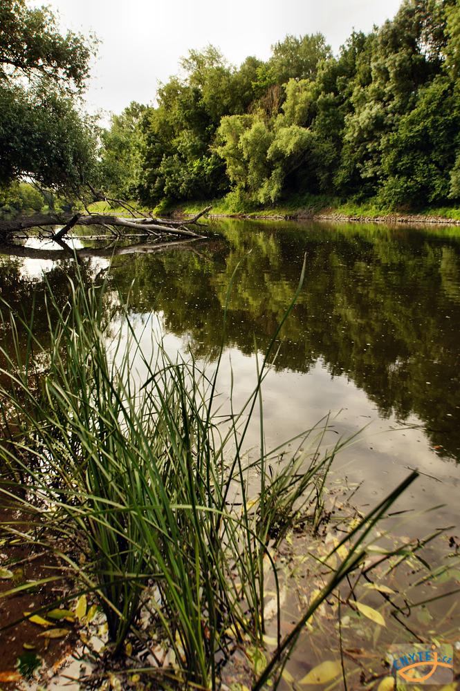 článek: Příběhy (ne)obyčejného rybaření 7.