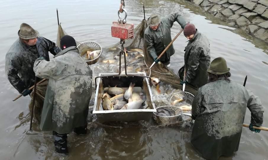 Jarní zarybnění revírů Východočeského územního svazu pokračuje – 12 týden