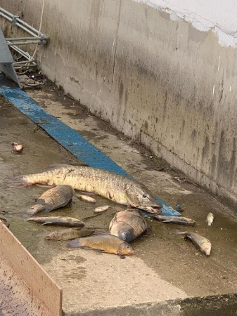 Na řece Bílině došlo k úhynu ryb