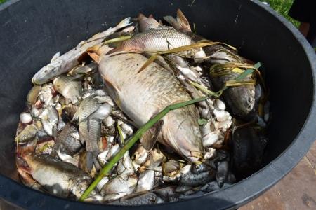 Dočasný zákaz rybolovu na revíru Dlažkovice z důvodu havarijního stavu kvality vody