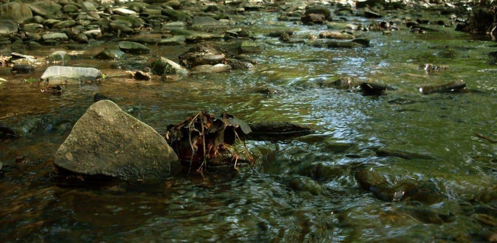 Zpotoku zmizela voda, uhynuly stovky ryb! Rybáři se snaží zjistit, co se stalo