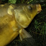 Lov ryb na feeder: Vynikající návazec pro rychlé a jednoduché nastražení pelet!