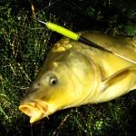 Rybaření se splávkem: Kapr na plavanou!