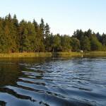KONFLIKT: Rekreanti chtějí vyhnat rybáře z oblíbeného rybníku, aby se mohli koupat! Petici proti rybářům podepsalo skoro 1000 lidí