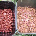 Levná kaprařina: Zčeho vyrábět kvalitní krmení na kapry za pár korun?