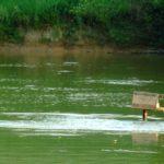 Rybáři při sečení rákosí zmasakrovali hnízda vodních ptáků! Hrozí jim pokuta!