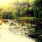 """Feeder na řece: Obrovské množství ryb s """"duhovým překvapením"""""""