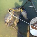 Agresivní mladík: Rybář neměl zapsaných 5 kaprů, na místě měl nepořádek! Policisty poslal do pr..le!