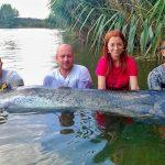 MONSTRUM: Na české pískovně chytili dalšího obrovského sumce! Ryba měřila přes 250 čísel!