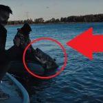 """VIDEO: Sumec o váze 107 kilo a délce 247 čísel! Čeští rybáři ukázali video svousatou """"obludou""""!"""
